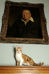 "© under license to London News Pictures. 30.11.2010. Jock the kitten explores his famous new home. A new kitten has taken up residence at 'Chartwell' the residence of the late Sir Winston Churchill. The former Prime Minister owned a marmalade coloured cat which he named Jock, after Sir Jock Colville, one of his personal secretaries. On his death, Churchill left wishes that there should always be a cat with four white paws and a white bib ""in comfortable residence"" at Charwell. The original Jock meant so much to Churchill that he attended many war time cabinet meetings with him and rumour has it that meals in the Churchill household did not commence until ginger tabby Jock was present at the table. The current Jock was rescued by The Cats Protection before being adopted by Chatwell's House and Collections Manager, Alice Martin. Picture credit should read Grant Falvey/London News Pictures"