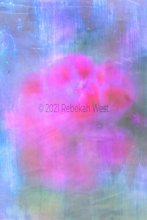 Hot pink flower posey in vertical field of bright scratchy blue and soft greens, posey sits centered right to left just above center, background primarily blue except for bottom right corner soft greens, flower art, iridescent, feminine, navy peony, high resolution, licensing, 3744 x 5616