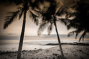 Coconut palms and surf at dusk, Kailua-Kona, Hawaii, USA