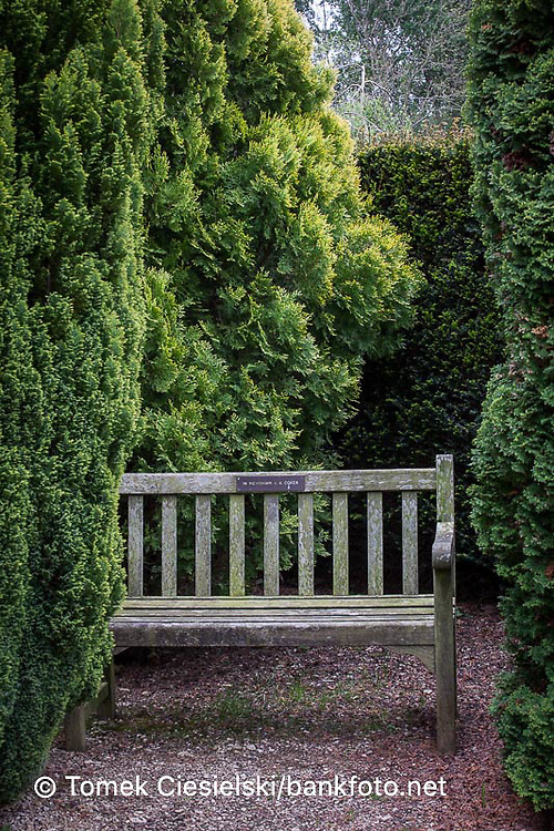 Wooden bench between old conifers