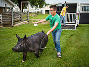 26 JUNE 2019 - CENTRAL CITY, IOWA: BRADY HOFPODARSKY guides his crossbred barrow to the check in area at the Linn County Fair. Summer is county fair season in Iowa. Most of Iowa's 99 counties host their county fairs before the Iowa State Fair, August 8-18 this year. The Linn County Fair runs June 26 - 30. The first county fair in Linn County was in 1855. The fair provides opportunities for 4-H members, FFA members and the youth of Linn County to showcase their accomplishments and talents and provide activities, entertainment and learning opportunities to the diverse citizens of Linn County and guests.       <br /> PHOTO BY JACK KURTZ