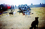Dogs, The Mother Festival, Somerset, 1995