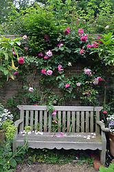 East Ruston vicarage gardens, Norfolk 2015