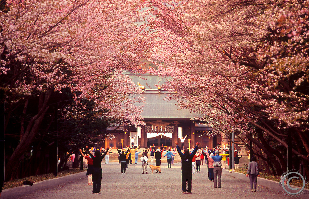 Every morning people gather at the entrance to Hokkaido's largest Shinto Shrine - Hokkaido Jingu - to do exercises to music played over the radio.