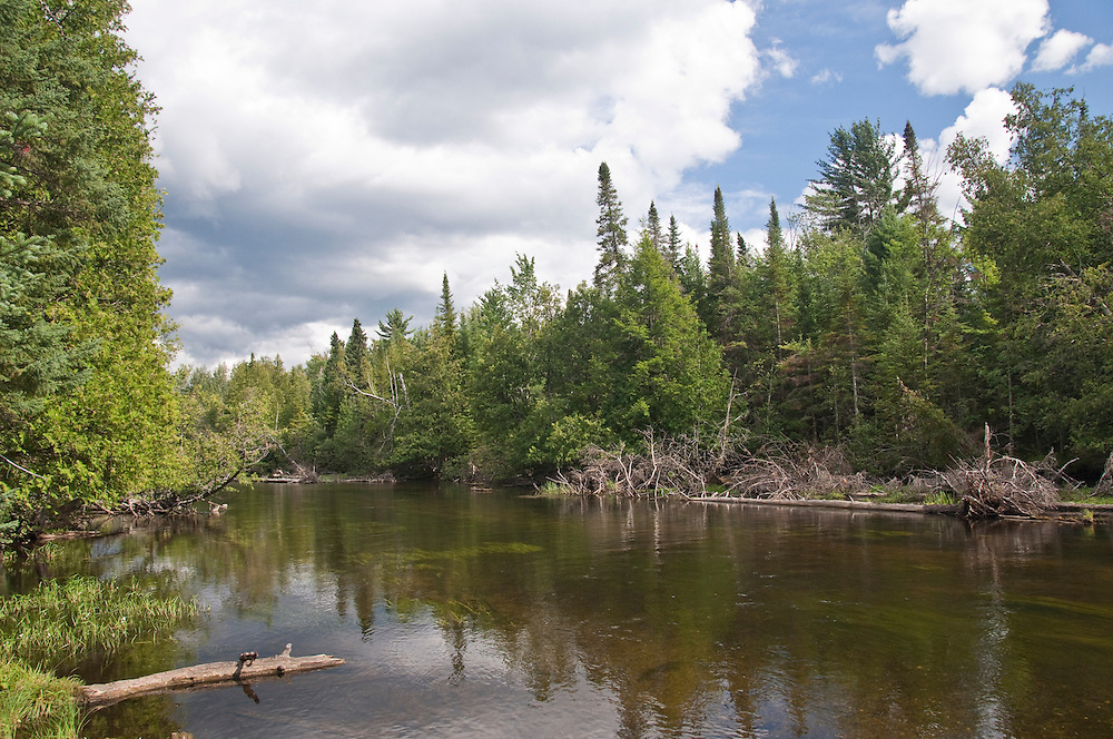 The North Branch of the Au Sable River near Grayling Michigan.