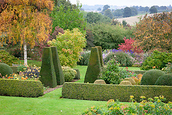 The parterre at Pettifers in autumn with yew pillars and box hedges. Betula ermanii - Gold birch, Dahlia 'Moonshine' syn 'Moonfire' and Sorbus 'Joseph Rock' - Mountain ash.