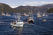 Commercial fishing seiners set their nets around herring during an opening of the 2007 Sitka Herring Sac Roe fishery.