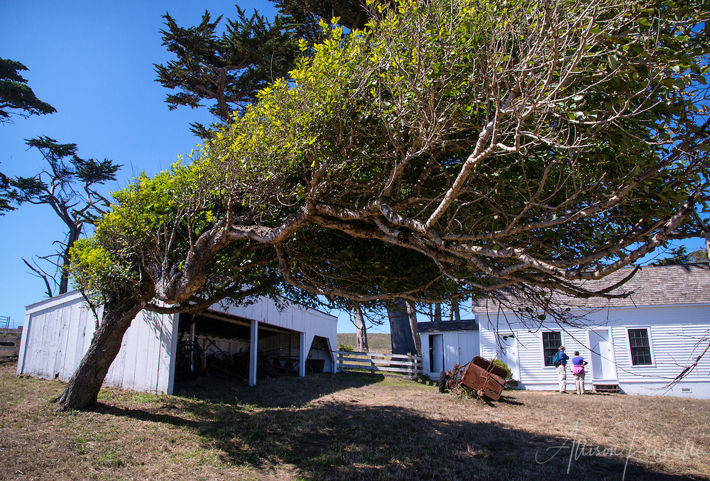 Pierce Point Ranch, Point Reyes, California