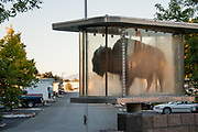 Buffalo on display in a case  in Greenwood Village Assisted Living RV Park