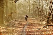 Nederland, Groesbeek, 17-12-2017Cerberus cross in de bossen van Groesbeek.Foto: Flip Franssen