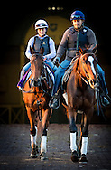 ARCADIA, CA - NOVEMBER 03:  Beholder walks through the paddock  at Santa Anita Park on November 03, 2016 in Arcadia, California. (Photo by Alex Evers/Eclipse Sportswire/Getty Images)