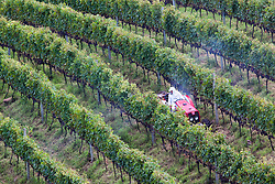 Spraying pesticides in vineyards / Pulverizacao de agrotoxicos em vinhedos. Ano/ Year 2010