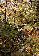Autumnal view of small stream beside the River Nith