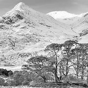An Tudair and Scots pines, Glen Affric