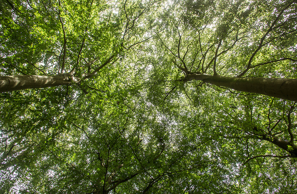Natur<br /> Natur, solskin, Marcelisborgskoven, århus, træer<br /> Foto: Brian Rasmussen/fotografhuset
