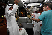 After landing at Doha Aiport from Baku, Azerbaijan, a group of Qatari men hold their most treasured birds whilst letting a fascinated tourist have a try on the transfer bus to the terminal. The men practise the art of falconry and to escape the heat of Qatar flew for a week to the cooler weathers of Azerbaijan to let the birds fly. The birds cost over US$10,000 each, have micro-chips in their legs so they can find them if they fly off and documents allowing them to travel abroad.