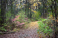 Colors of fall dominate a wooded path under a dark November sky almost as if the leaves saved some sunshine for a dreary day. This is a hiking trail in Fabyan Forest Preserve Geneva, Illinois.