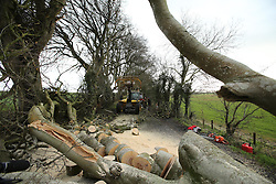 © Licensed to London News Pictures. 29/01/2016. Ballymoney, UK. Workmen begin removing fallen trees at the famous tourist site of the Dark Hedges, County Antrim where scenes from Game Of Thrones were filmed, after Storm Gertrude caused power cuts and a number of blocked roads with trees. Photo credit : Paul McErlane/LNP