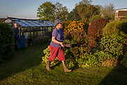 An elderly lady carries homegrown produce from her greenhouse in her rural garden, on 5th May 2018, in Wrington, North Somerset, England.