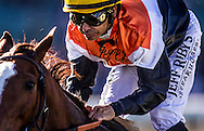 Gulsary with Mike Smith up  at Santa Anita Park in Arcadia, California on January 18,  2014.