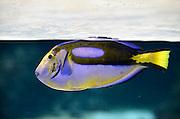 Nederland, Arnhem, 20-8-2014Het tropisch aquarium Burgers Ocean van dierenpark Burgers Zoo. Foto: Flip Franssen/Hollandse Hoogte