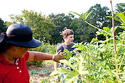 Kendrick Brinson.LUCEO Images..Thoi Seggerman (left) and Daniel Hoover pick okra in the Historic Mableton Community Garden in Mableton, Georgia September 14, 2011. Daniel is the lead volunteer for AARP's plot in the garden...Model Released: Yes.AARP Contract #7113.WICHITA/Bellovin/AARP Bulletin Today