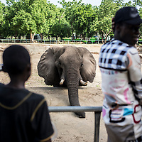People and students enjoy their free time in the Maiduguri zoo. Animals suffer the crisis consequences, they are abandoned.