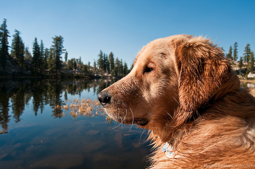 A young wet dog sits next to Grouse Lake in Desolation Wilderness, Eldorado National Forest, California