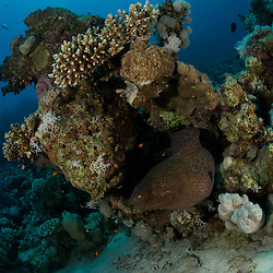 Dive Spot: Breakers Housereef