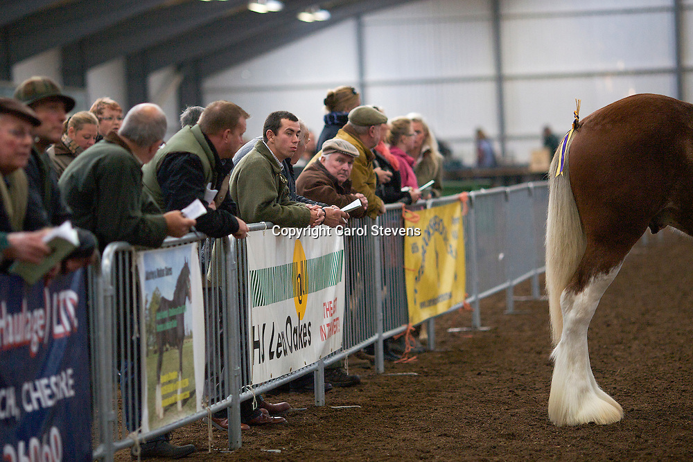 North West and Wales Shire Foal Society Show 2012<br /> Mr J Bradwell and Ms R Hendry's Westcott Winston  f 14/04/11<br /> Sire  Carnaff Perfection   Dam  Castletown Connie<br /> 2nd place  Any Other Heavy Breed Yearling Class