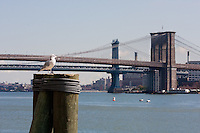 brooklyn and manhattan bridges in New York City October 2008