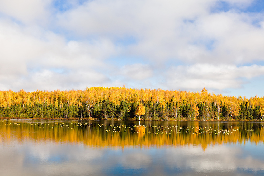 Reflection of fall foliage on Clunie Lake on Fort Richardson in Eagle River in Southcentral Alaska. Afternoon.