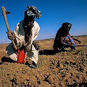 The women who participate in the cooperatives chose to plant products that are scarce in the area such as vegetables and mint, which is essential to the preparation of Mauritian tea, and that supplement the traditional local grain plantations. Wothie, Mauritania.