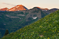 Morning light along 403 Trail, which links Washington Gulch with the East River drainage near Gothic Mountain and Crested Butte Colorado.