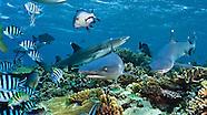 Fiji - Beqa Lagoon