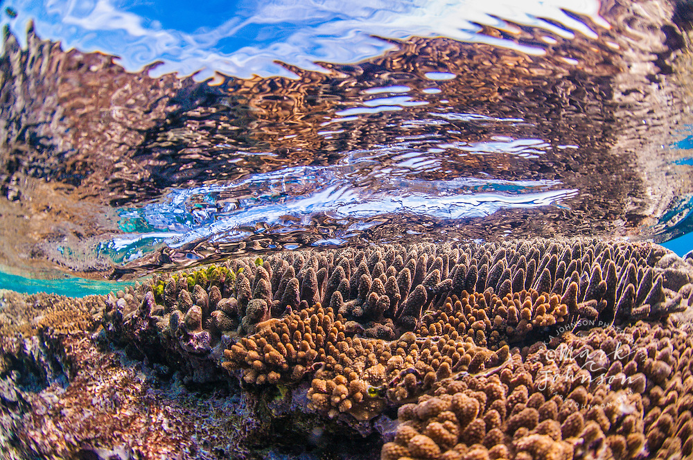 Underwater of a wave breaking over a coral reef, Lady Elliot Island, Great Barrier Reef, Queensland, Australia