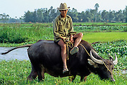 VIETNAM, AGRICULTURE,  rural farmer riding  water buffalo