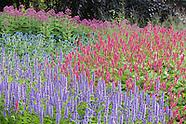 Mid Summer at Trentham Gardens