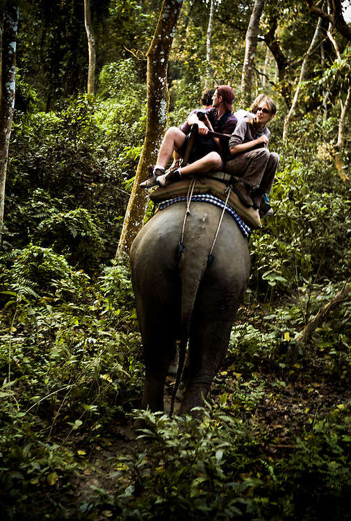 Tourists atop an elephant keep a close eye out for the ultimate in jungle trek trophies -a tiger spotting.