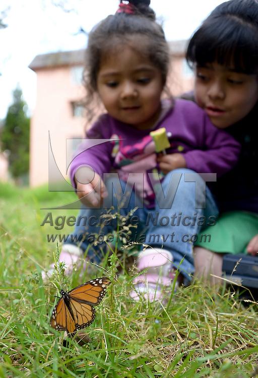 Toluca, México.- Vecinos del conjunto habitacional La Floresta se sorprendieron por la visita de mariposas monarca que llegaron desde la tarde del domingo, algunos niños fascinados por el suceso tomaron fotografías de estos pequeños visitantes. Agencia MVT / Crisanta Espinosa