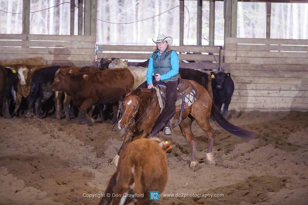 April 30 2017 - Minshall Farm Cutting 2, held at Minshall Farms, Hillsburgh Ontario. The event was put on by the Ontario Cutting Horse Association. Riding in the 25,000 Novice Horse Non-Pro Class is Rosalee Munch on Xrey owned by the rider.