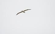 An albatross in Dunedin.