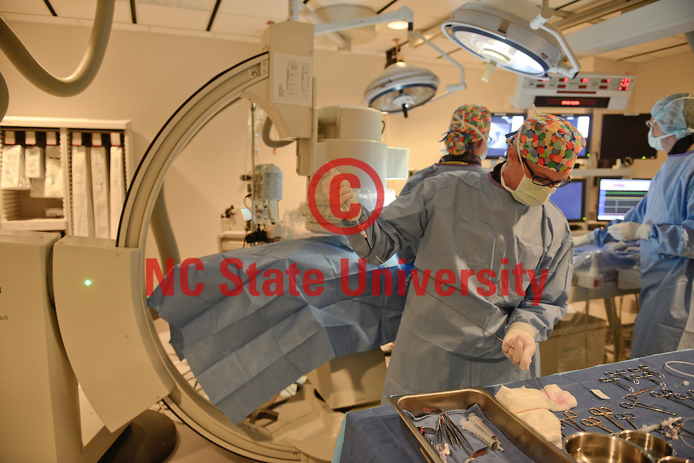 A surgury is performed on a dog at the College of Vet Med at the Biomedical campus. Photo by Marc Hall
