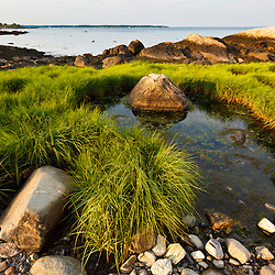 Rocks and salt marsh grasses along the shoreline at Odiorne Point State Park in Rye, New Hampshire.