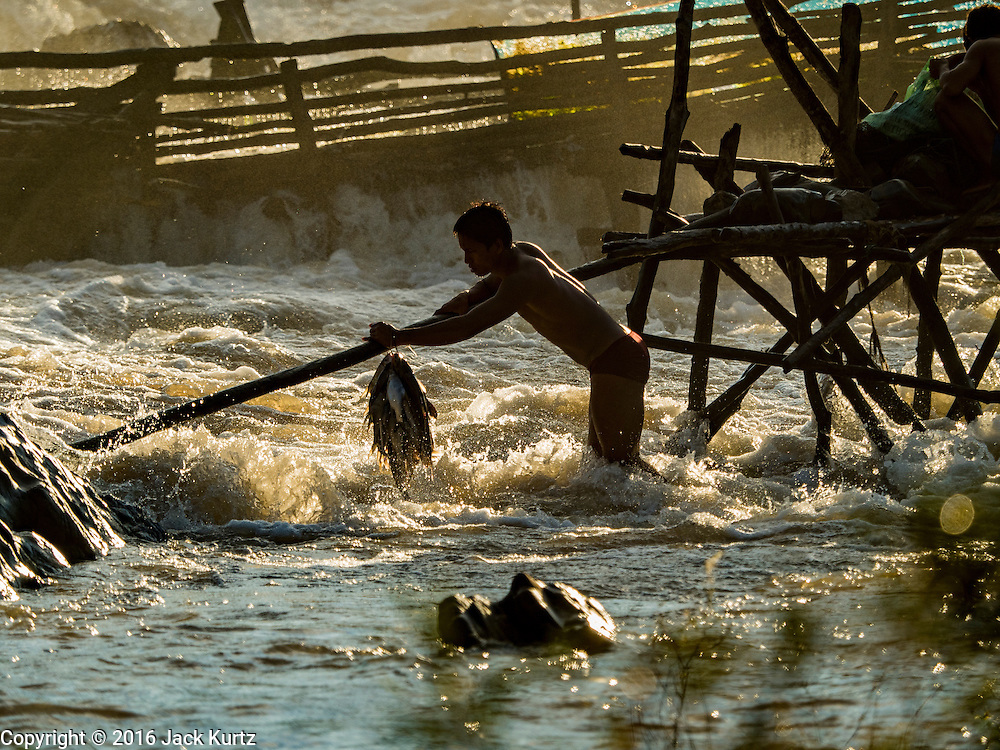 18 JUNE 2016 - DON KHONE, CHAMPASAK, LAOS:  A fisherman with his catch navigates the dangerous rope bridges through Khon Pa Soi Waterfalls, on the east side of Don Khon. It's the smaller of the two waterfalls in Don Khon. Fishermen have constructed an elaborate system of rope bridges over the falls they use to get to the fish traps they set. Fishermen in the area are contending with lower yields and smaller fish, threatening their way of life. The Mekong River is one of the most biodiverse and productive rivers on Earth. It is a global hotspot for freshwater fishes: over 1,000 species have been recorded there, second only to the Amazon. The Mekong River is also the most productive inland fishery in the world. The total harvest of fish from the Mekong is approximately 2.5 million metric tons per year. By some estimates the harvest in the Tonle Sap (in Cambodia) had doubled from 1940 to 1995, but the number of people fishing the in the lake has quadrupled, so the harvest per person is cut in half. There is evidence of over fishing in the Mekong - populations of large fish have shrunk and fishermen are bringing in smaller and smaller fish.        PHOTO BY JACK KURTZ