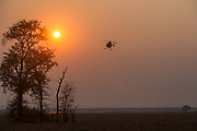 Hughes 500 helicopter (Pilot Barney O'Hara)<br /> Liwonde National Park, MALAWI, Africa<br /> Chopper used as a darting platform while testing buffalo for foot-and-mouth disease in a trans-border veterinary effort.
