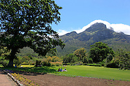 The Kirstenbosch Botanical Gardens in Cape Town South Africa.  Photograph by Dennis Brack...