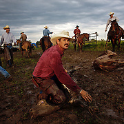 Doug Stark  holds down a calf, waiting for a team of helpers  that would vaccinate, brand and insert  an implant growth stimulant into the animal, at the Bar B ranch near Albia, Iowa.  Rainy conditions on this morning in August of 2008, made the task more difficult because of the slippery, muddy conditions.  Twice each year ranch owner Catherine Bay holds the roundup for new calves born to her herd of over 2,000 cattle.