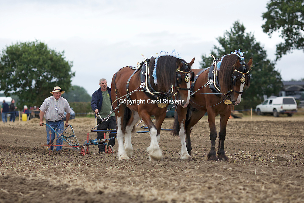 Working Horse Demonstrations National Horse Ploughing Competition and Demonstrations 2016<br />