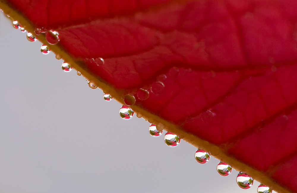 closeup of water drops on a leaf